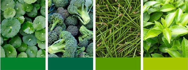 Petitfée Artichoke Soothing szemmaszk növényi kivonatai