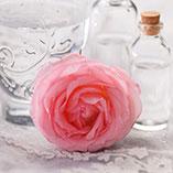 Damaszkuszi rózsa